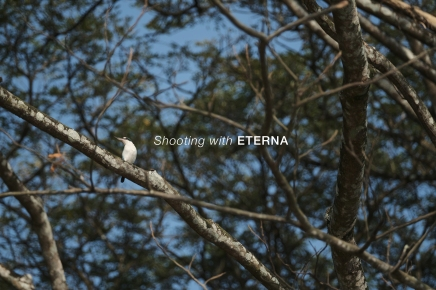 Shooting Eterna with X-H1