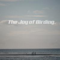 Joy of Birding (w/o a telephoto lens.)