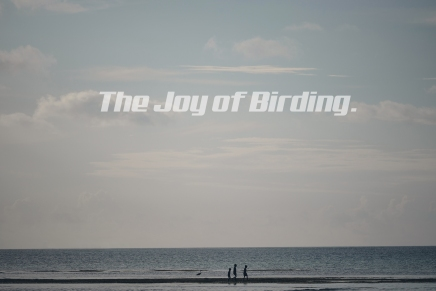 Joy of Birding (w/o a telephoto lens.)